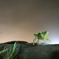 august_tree_ii.jpg